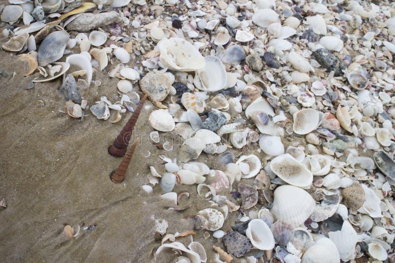 Shell tło zdjęcia stock