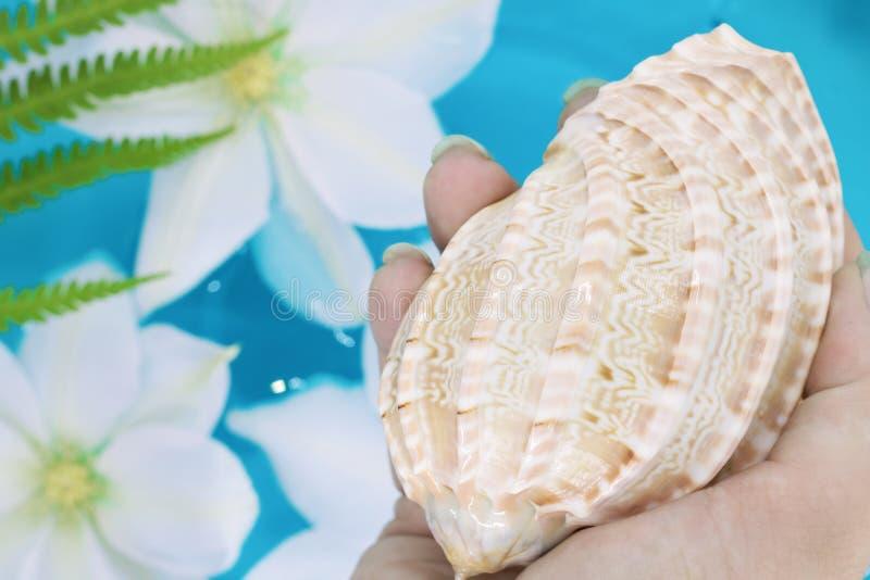 shell ter beschikking, tegen de achtergrond van witte bloemen die in blauw water, tropische kleuren drijven royalty-vrije stock foto