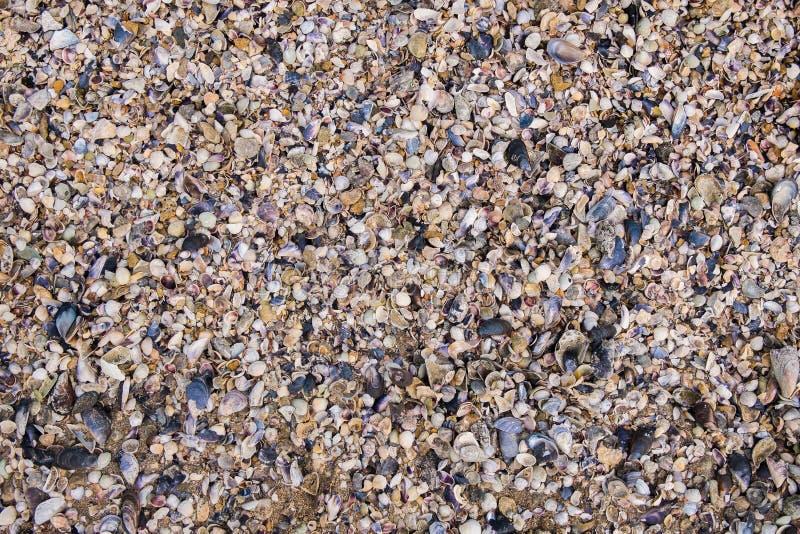 Shell textuur stock afbeeldingen