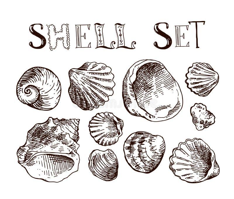 Shell tiré par la main illustration stock