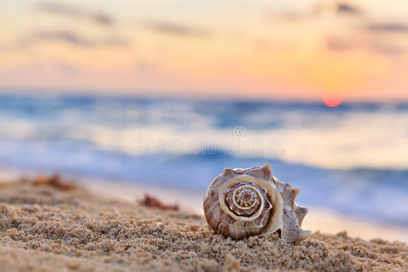 Shell on a Tropical Sandy Beach with Sunrise over Ocean as a background, vacation concept royalty free stock images