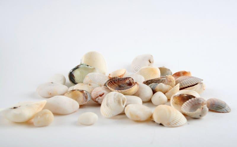 Shell und Stein lizenzfreie stockbilder
