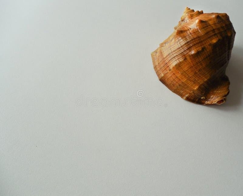 Shell uno en la esquina derecha de la imagen imágenes de archivo libres de regalías