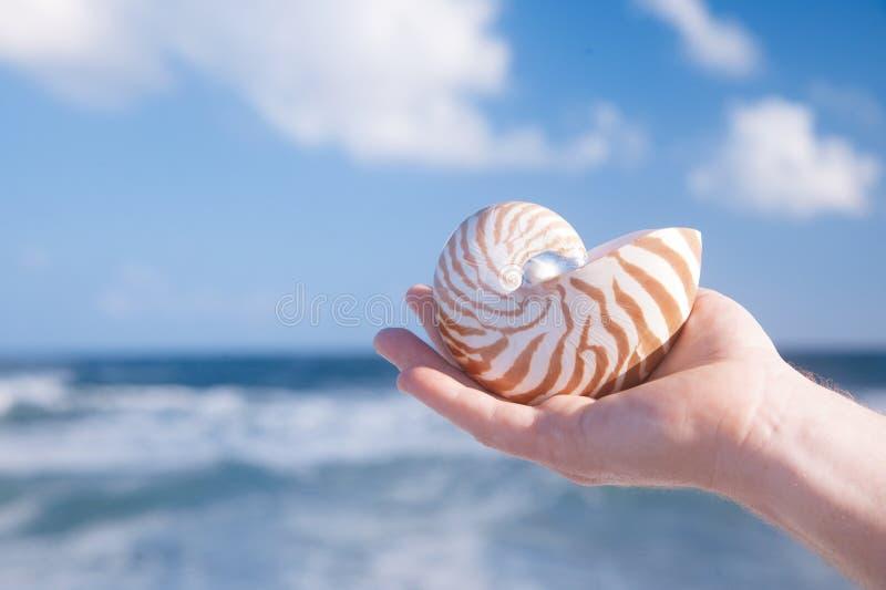 Shell van de holdingsnautilus van de mensenhand tegen overzeese golven stock foto