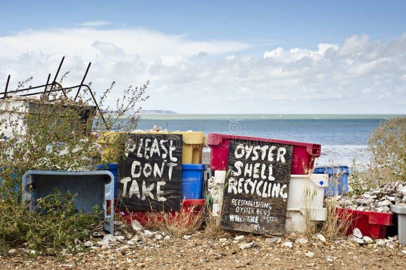 Shell Van De Oester Recycling Royalty-vrije Stock Foto's
