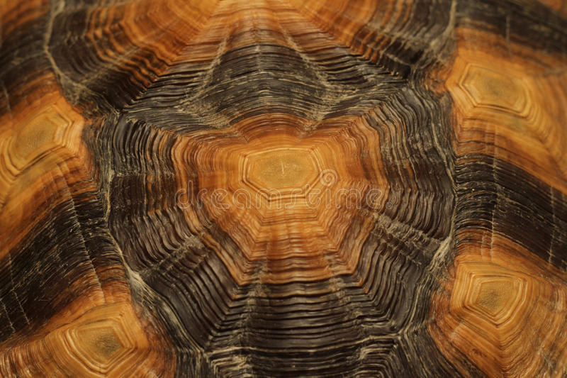 Shell van de schildpad samenvatting stock foto's