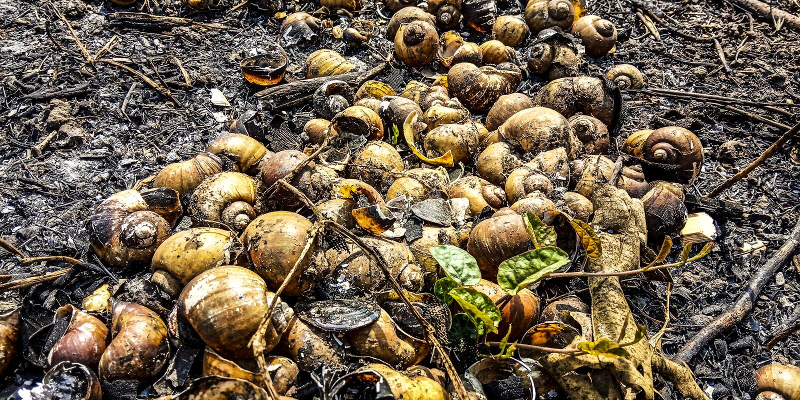 Shell van de slak royalty-vrije stock fotografie