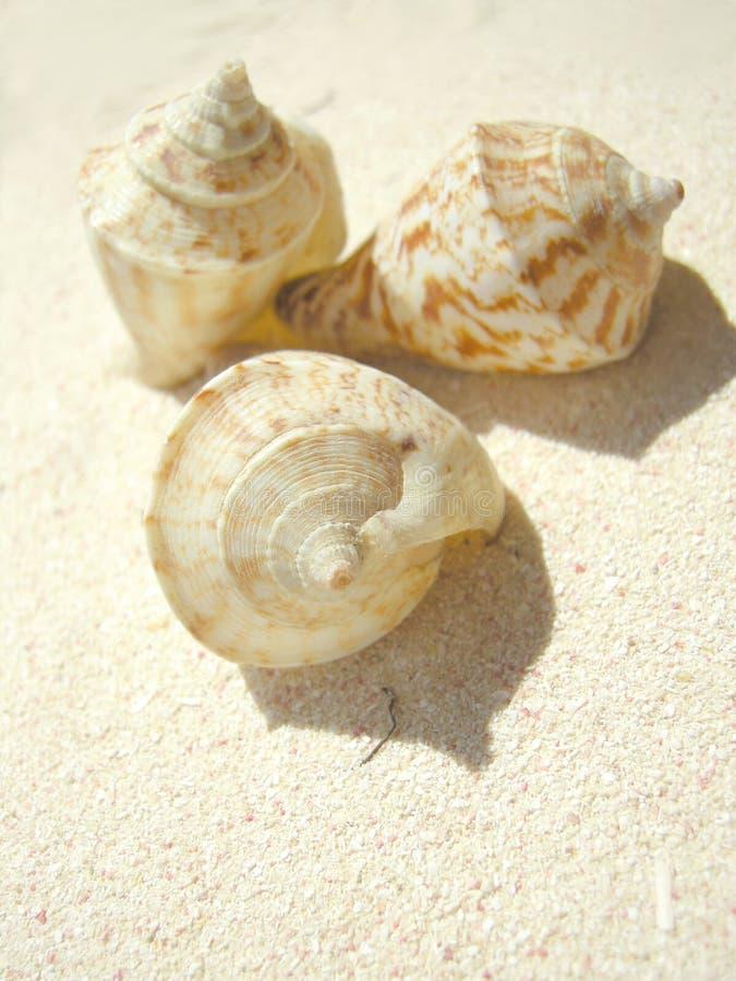 Shell van het strand royalty-vrije stock fotografie