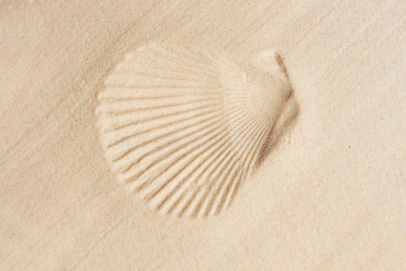 Shell van het zand stock fotografie