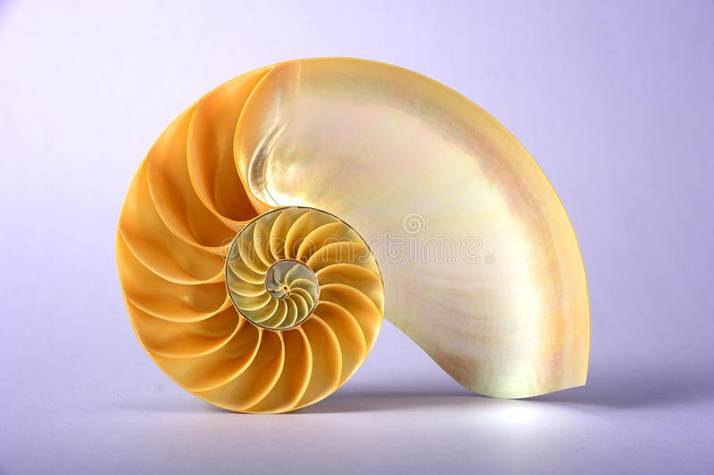 Shell van Nautilus royalty-vrije stock foto's