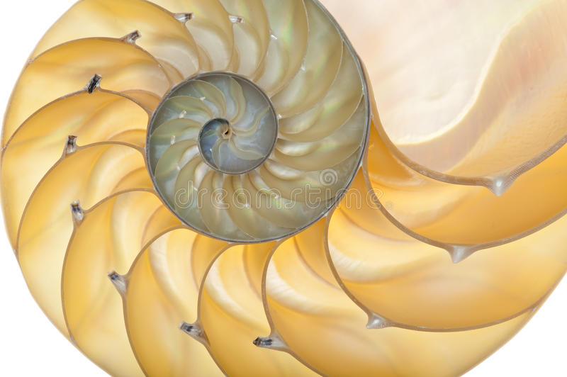 Shell van Nautilus stock afbeeldingen