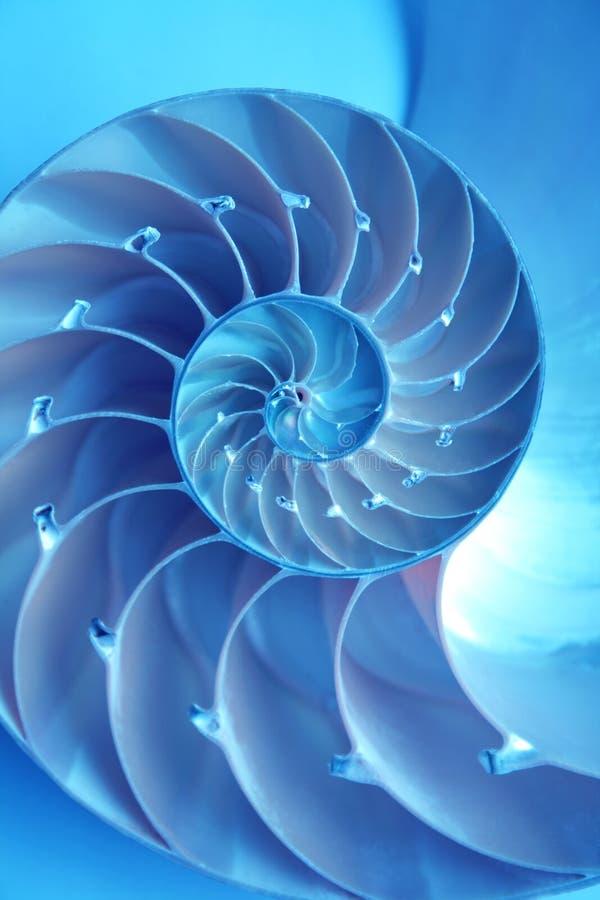 Shell van Nautilus stock afbeelding
