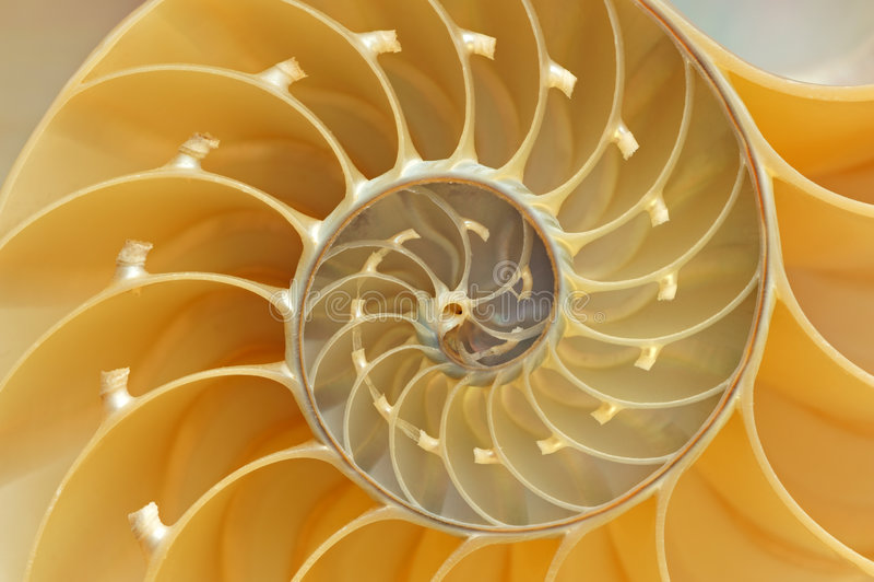 Shell van Nautilus Detail stock afbeeldingen