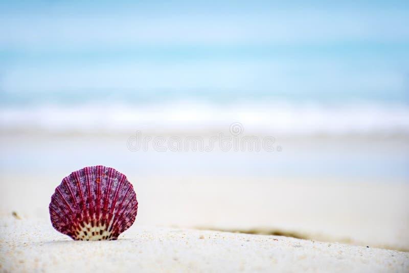 Shell vermelhos na praia fotografia de stock royalty free