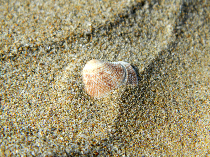 Shell w piasku obrazy stock