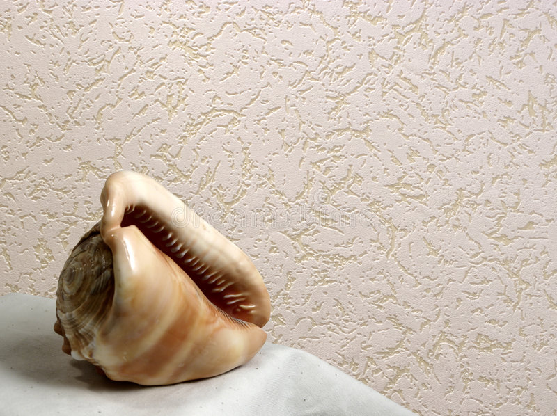 Shell and wallpaper royalty free stock photos