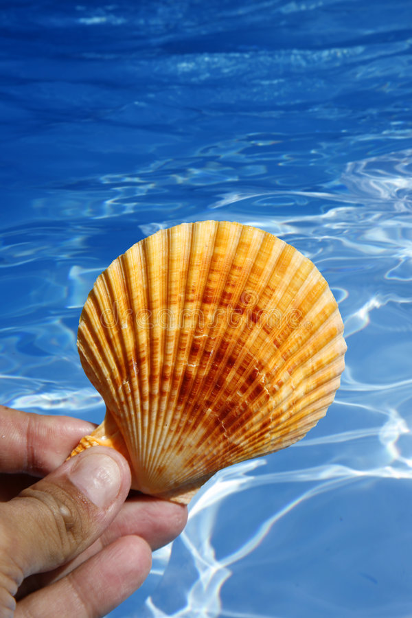 Shell and Water stock image