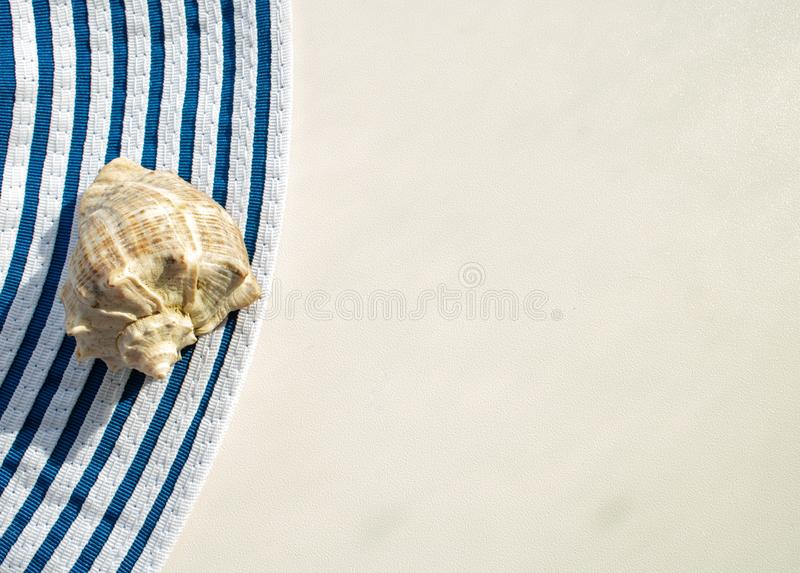 Shell on a white background stock images