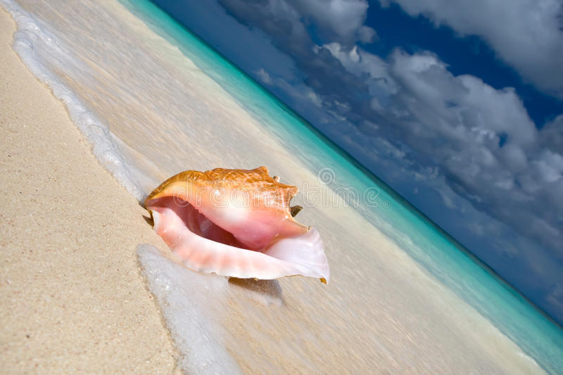 Download Shell On A White Sand Beach Near Blue See Stock Image - Image: 13333355