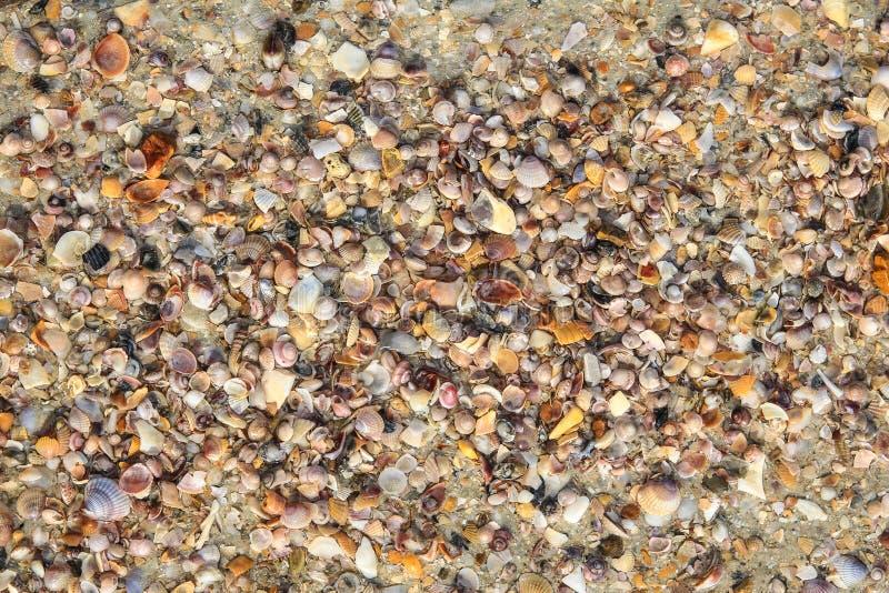 Download Shell y crustáceos foto de archivo. Imagen de fondo, shelles - 41918856