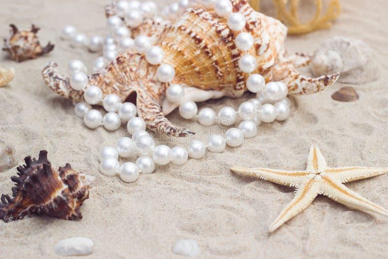 Shell z perłami na piaskowatej plaży obrazy royalty free