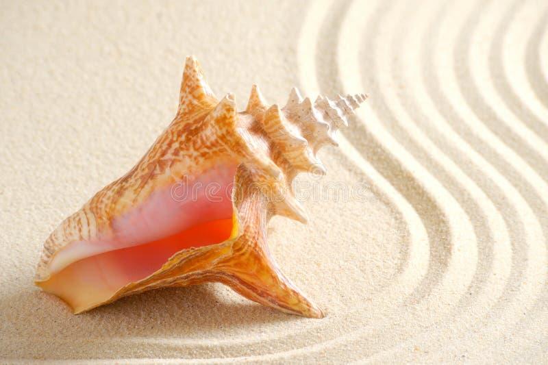 Shell in zand royalty-vrije stock afbeeldingen