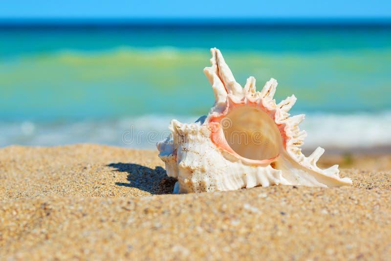 Shell in zand aan de overzeese kant royalty-vrije stock foto's