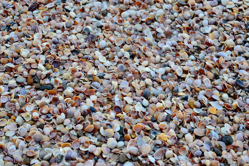 Shell-zand overzees strand stock foto's