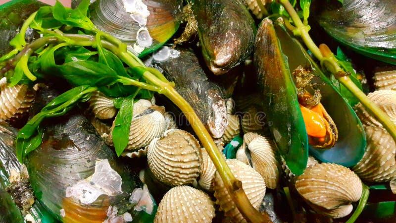 Shell-zeevruchten royalty-vrije stock afbeelding
