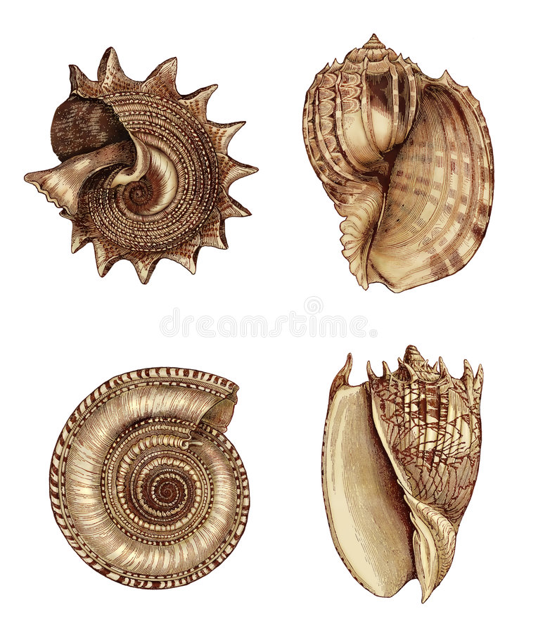 Download Shell-Zusammenstellung 1 stock abbildung. Illustration von sepia - 9079714