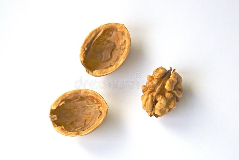 Shelled walnut on white background royalty free stock photo