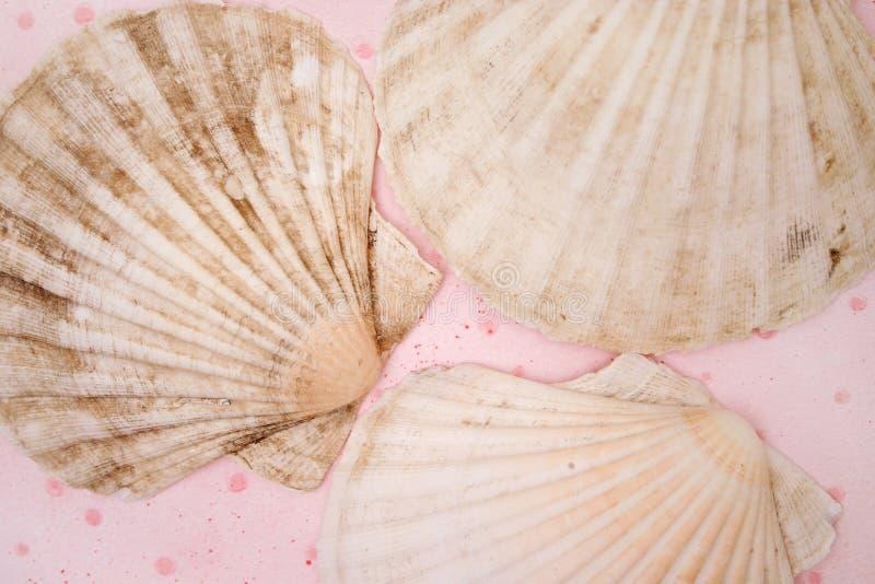 Download Shelles imagen de archivo. Imagen de scallop, marina, crustáceo - 183885