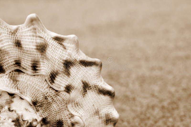 Shelles fotos de archivo