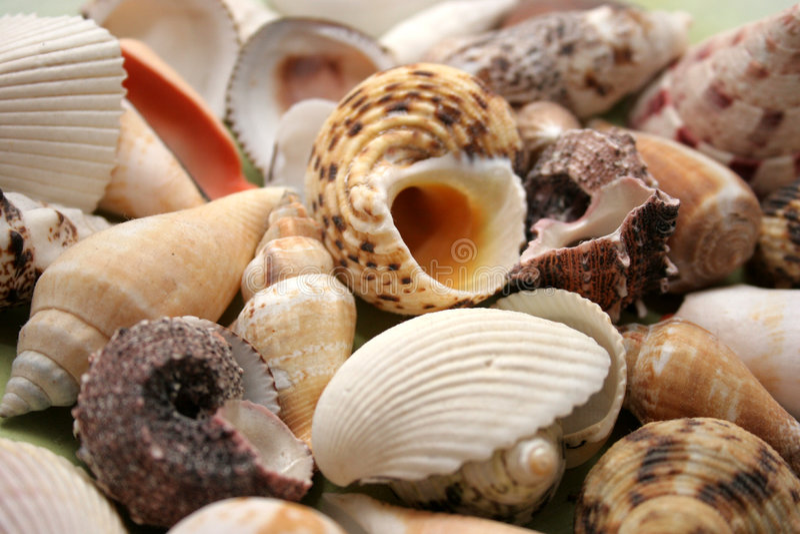 Shelles fotografía de archivo