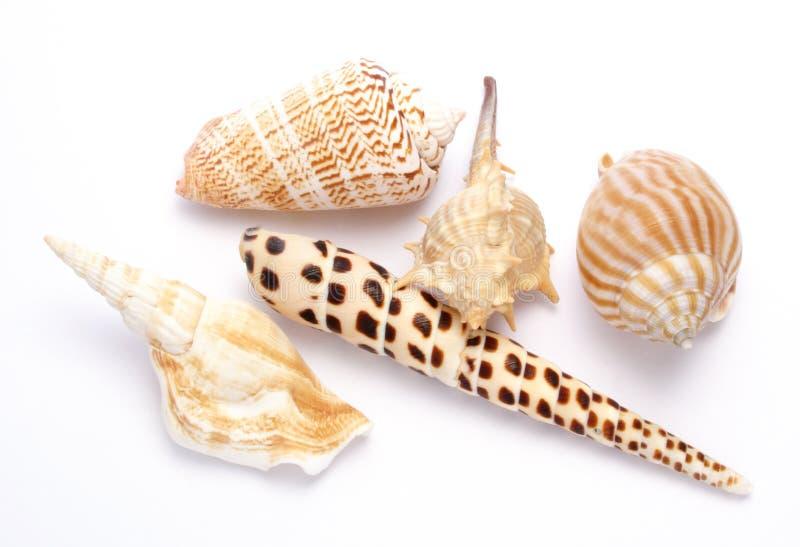 Shelles imagenes de archivo