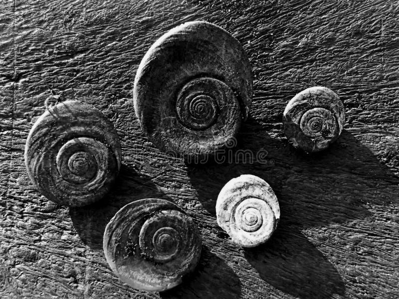 Shelles circulares imagen de archivo libre de regalías
