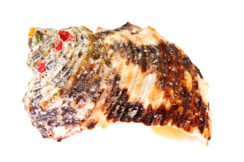 Shelles coloridos del mar fotos de archivo
