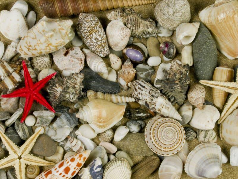 Shelles de caracoles imagenes de archivo
