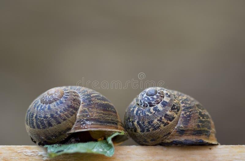 Shelles del caracol fotografía de archivo libre de regalías