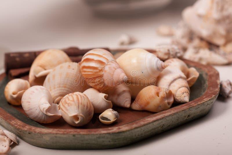 Download Shelles del mar imagen de archivo. Imagen de orilla - 100532545