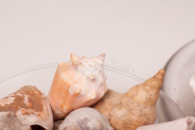 Download Shelles del mar foto de archivo. Imagen de arena, pureza - 100532654