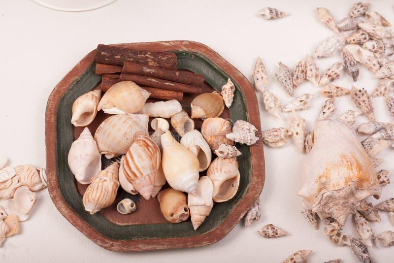Download Shelles del mar imagen de archivo. Imagen de mineral - 100532693
