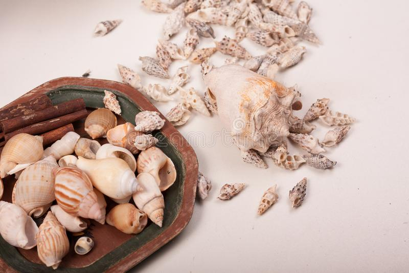 Download Shelles del mar foto de archivo. Imagen de mineral, florero - 100532726