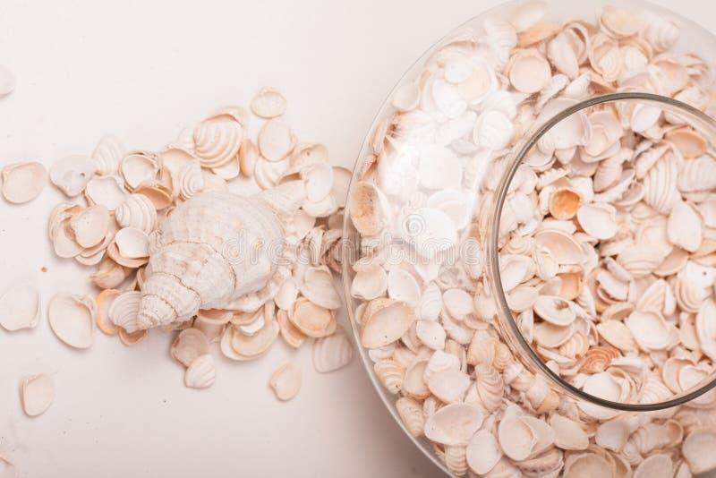Download Shelles del mar foto de archivo. Imagen de verano, arena - 100532816