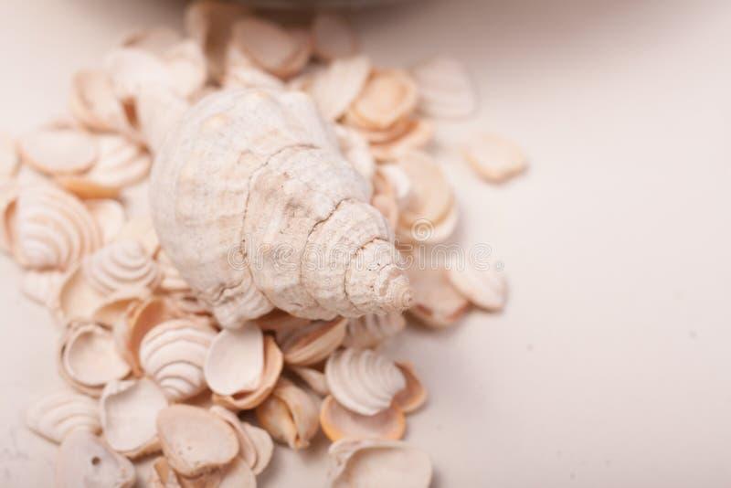 Download Shelles del mar foto de archivo. Imagen de verano, agua - 100532874
