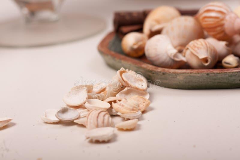 Download Shelles del mar foto de archivo. Imagen de verano, blanco - 100532966