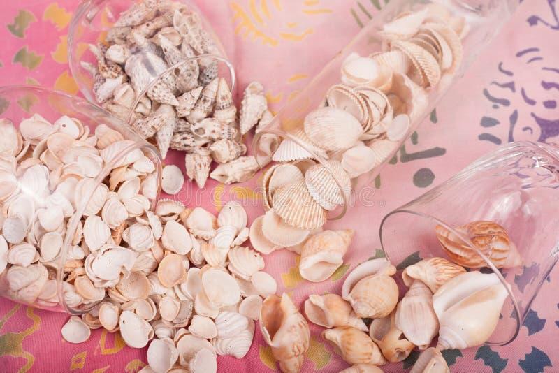 Download Shelles del mar foto de archivo. Imagen de pureza, blanco - 100534918