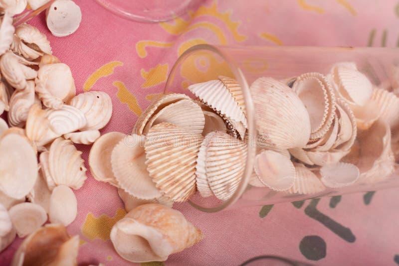 Download Shelles del mar imagen de archivo. Imagen de shelles - 100534987
