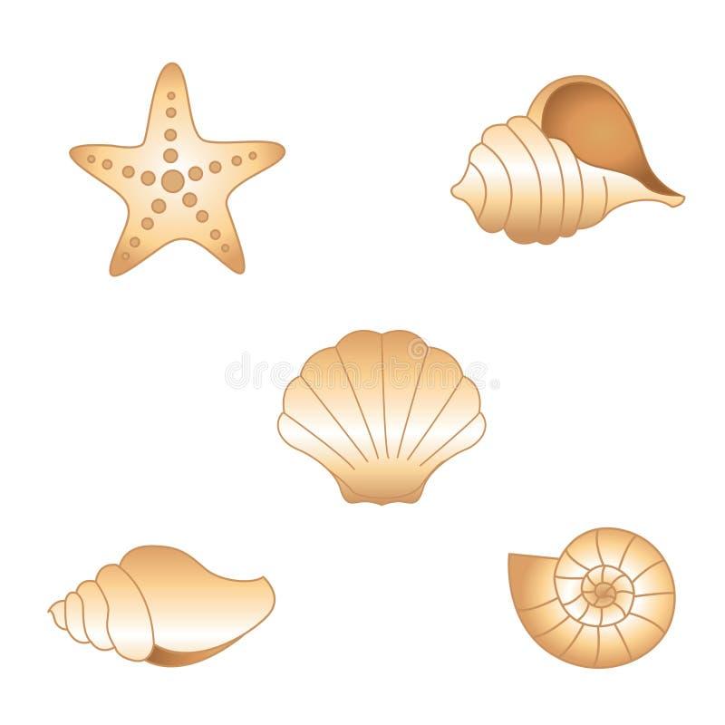Shelles del mar ilustración del vector