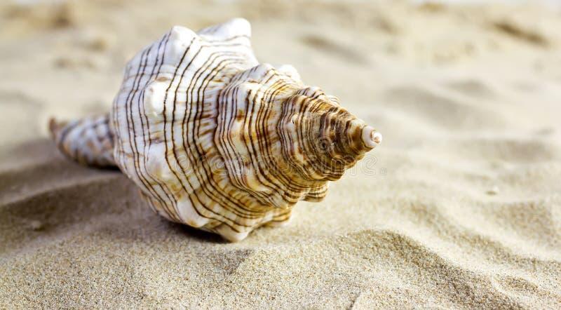 Shelles del mar. fotos de archivo